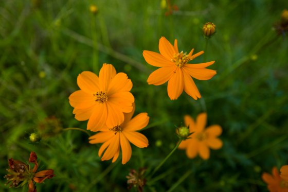 pretty flowers dotted the meadow...