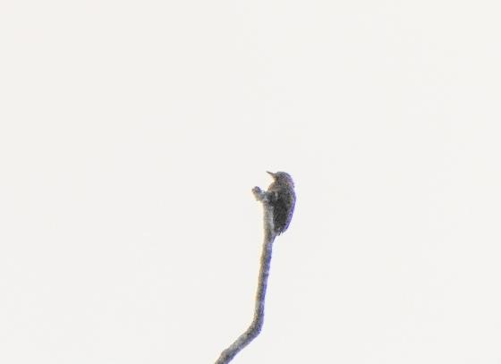 dscn6495