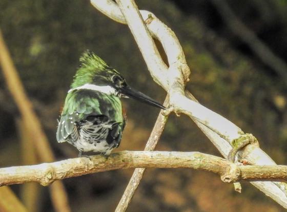 green KF (3)